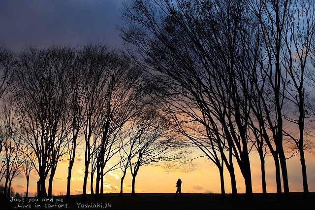 2月 水元公園