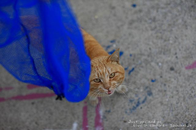 城ヶ島の猫ちゃん