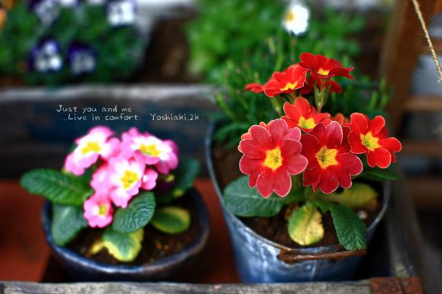 花?  赤い花?