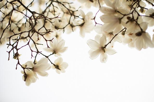 綺麗な花だよね