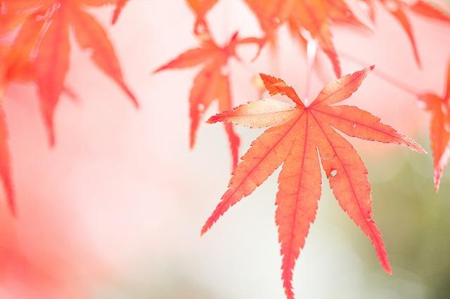 穴だらけの紅葉ばっかり