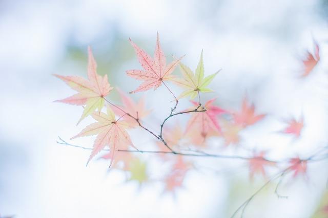 これも成田山公園です