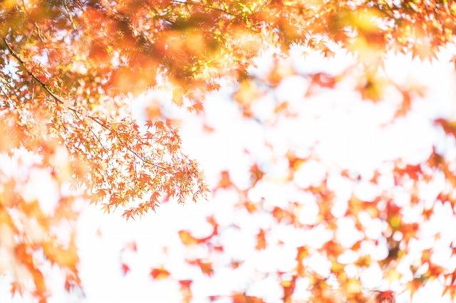 成田山公園の紅葉