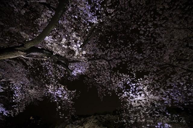夜桜も良いもんだ