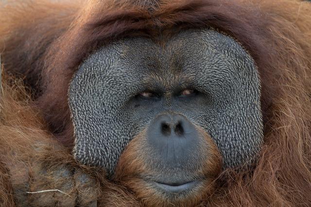 年賀状用の写真を撮りに市川市動植物園にて