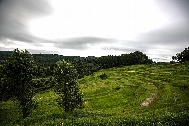 大山千枚田