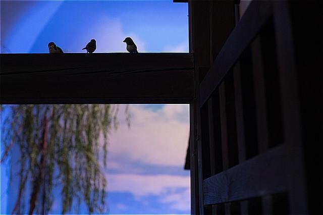 スズメが3羽とまってた