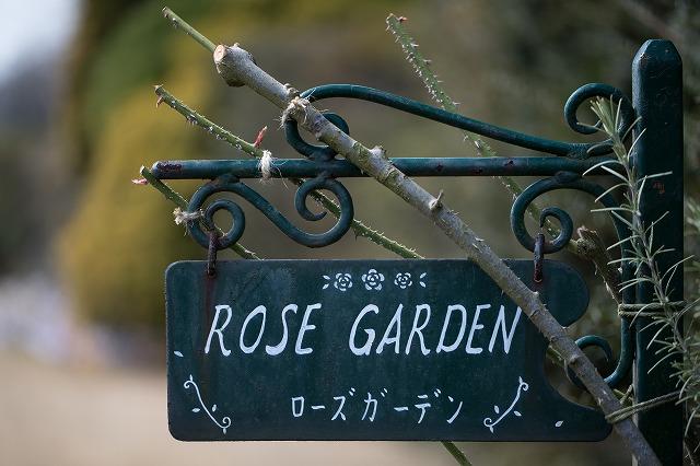 薔薇なんて1輪も咲いてなかったんですけどね